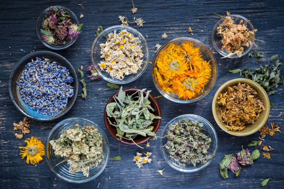 De l'herboristerie à l'industrie pharmaceutique