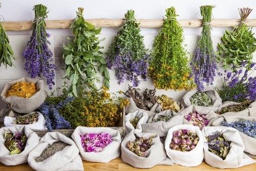 Quels sont les avantages de la phytothérapie?
